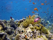 Cheap flights to Sharm el Sheikh: Scuba