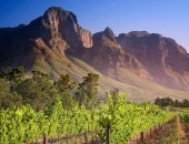Cheap flights to Cape Town: Vineyards