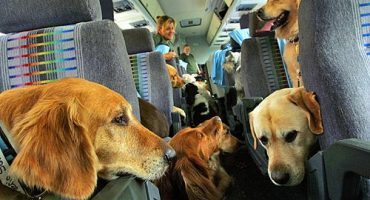 Pet Airways, an airline only for animals