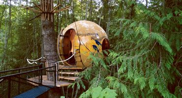 Sweet dreams in a tree hotel