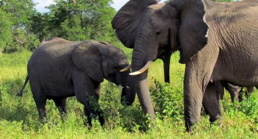 #TTOT Round-up: Scoping out wildlife all over the world