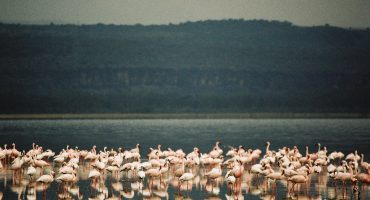 Bird Watching: Kenya's Lake Nakuru for £368
