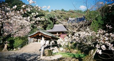 Enlightening destinations: Japan's 88 Temple Circuit