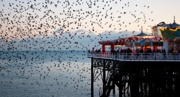 Murmuration: an ode to nature