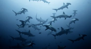 #fridayfinds: swimming with sharks