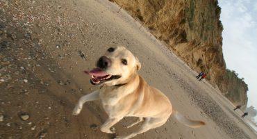 Pet travel: getting your pet a passport