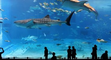 Singapore to open world's biggest oceanarium