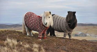 Why visit Scotland? Their ponies wear jumpers