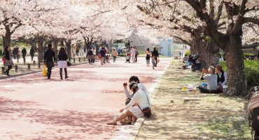 Sakura time: this year's cherry blossom festivals
