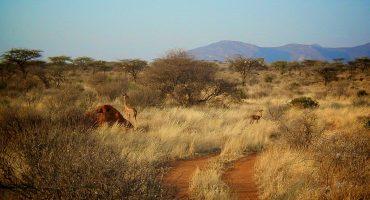 Safari adventures: what to pack
