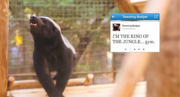 Johannesburg Zoo's badger is tweet-tastic