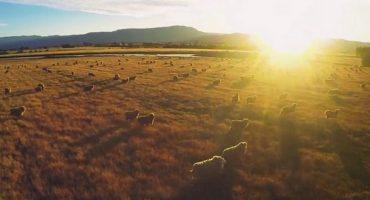 VIDEO: Australia from a bird's eye view