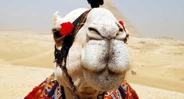 How to: experience Cairo for FREE