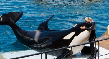 Should you go to SeaWorld?