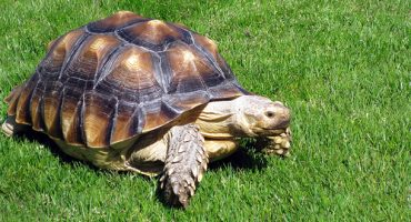 Boy tries to smuggle pet turtle on plane