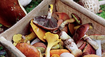 France in fall is top for foodie travellers