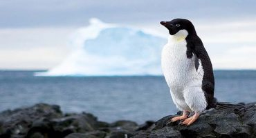 Jobs abroad: Antarctica's post office is hiring!