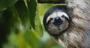 This singing sloth wants to 'Save The Americans'