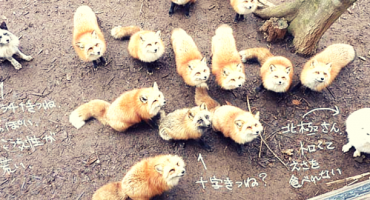 PHOTOS: Japan's Fox Village