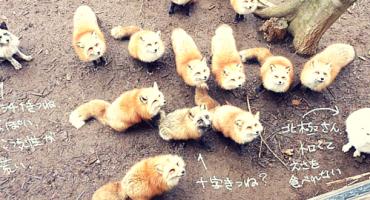 PHOTOS: Japan's Fox Village