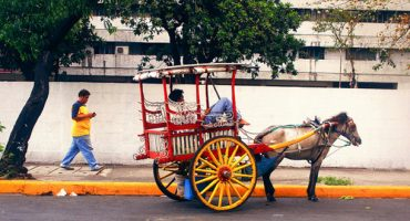 Puerto Rico bans horse-drawn carriages from the capital