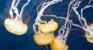 Beach bummer: what to do if a jellyfish stings