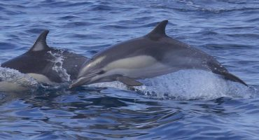 Rare sight: 30 dolphins perform show on English coast