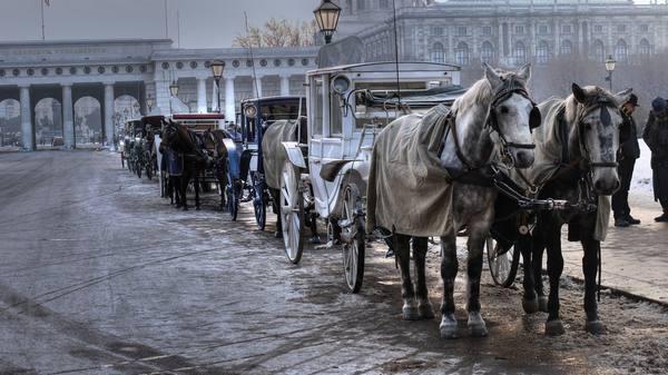 horse-vienna