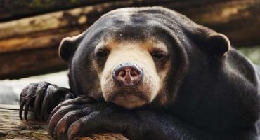 Stop illegal wildlife trade with new tourist app