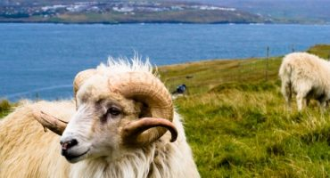 Sheep View is the new Street View in the Faroe Islands