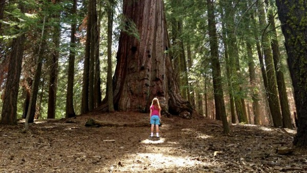 Sequoia-Californie-National-Geographic