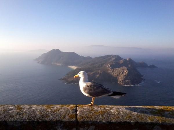 cies-island-seagull