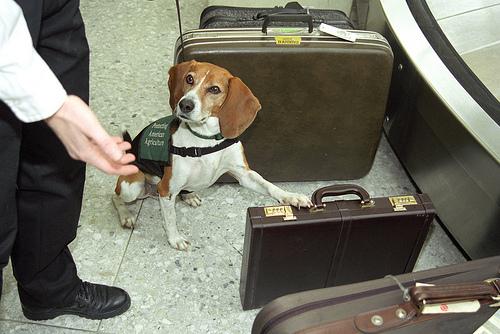 control-dog