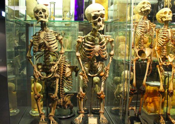museum-vrolik