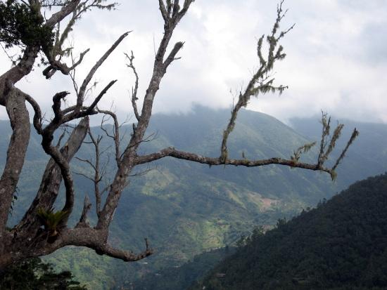 Blue-Mountains-Jamaica