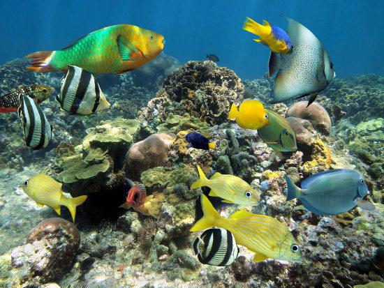 jamaica-submarino
